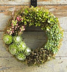 Succulent wreath, great idea for all year round garden wall decor.