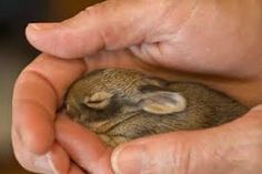 Image result for sleeping rabbit