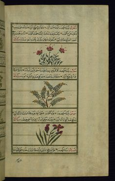 Saffron, rue, and lily of the valley  Wonders of Creation  by Qazwīnī 1293 was translated to Turkish in 1717  completed by Rūzmah-ʾi Nāthānī - W659
