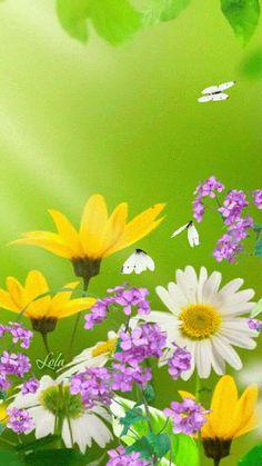 Butterflies & flowers gif