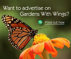 A successful butterfly garden includes both nectar plants for adults and food sources for the caterpillars.  Most species are plant specific. This site lists the host plants by species as well as wonderful tips on planting your butterfly garden.