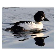 Bird, Pets, Animals, Outdoor, Outdoors, Animales, Animaux, Birds, Animal
