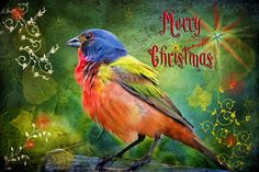 painted bunting - Google Search