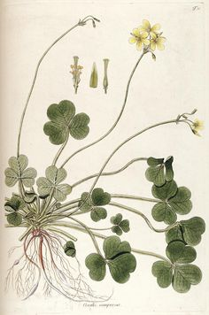 n128_w1150 | Fragmenta botanica, figuris coloratis illustrat… | Flickr - Photo Sharing!
