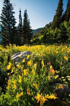 Northern Utah.