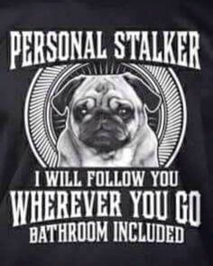 One of the best things about a pug, you are never alone.