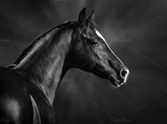 B&W portrait of horse by Horses and Dogs on @creativemarket