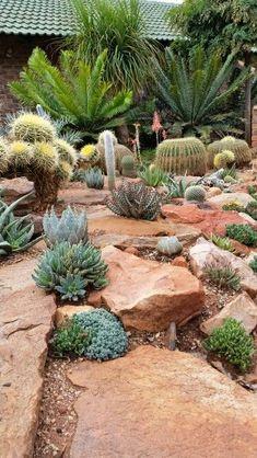 Cacti & succulents garden