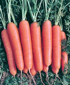 Scarlet Nantes Heirloom Carrot Seeds Non-GMO Naturally Grown Open Pollinated Gardening Still Tasty, Loose Weight Fast, Carrot Seeds, Tomato Seeds, Organic Seeds, Organic Gardening Tips, Baby Carrots, Garden Seeds, Nutritious Meals