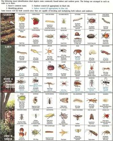 Insect ID Chart                                                                                                                                                                                 More