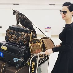 "75.7k Likes, 1,552 Comments - Dita Von Teese (@ditavonteese) on Instagram: ""We've arrived in #Houston #adventurecat @aleistervonteese loves cruising through the airport like…"""