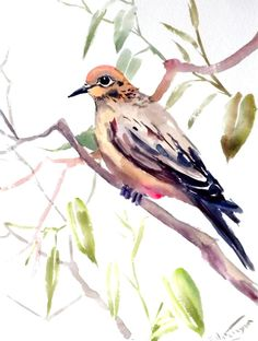 Mouring Dove Original watercolor painting 12 X 9 by ORIGINALONLY, $25.00