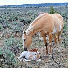 Mama and her newly born foal.