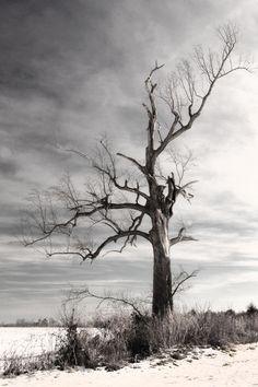 blanksayswhat:  Dead Tree in Upper Brandon.  December 2010.