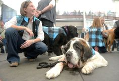 """. Denver International Airport introduced the dogs in it\'s new Canine Airport Therapy Squad (CATS) program in the Jeppesen Terminal on Thursday, October 29, 2015. Rachel Juranek sits with her therapy dog \""""Parker\"""" after the introduction ceremony. 17 of the 28 dogs were on hand to meet and greet travelers and employees offering a little stress relief.They will roam the concourses mingling with travelers. (Photo by Cyrus McCrimmon/The Denver Post)"""