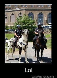 Great Dane Vs Horse