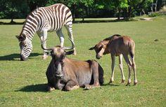 Dans le village de Kirikou... à Nantes - Parc animalier Planète sauvage