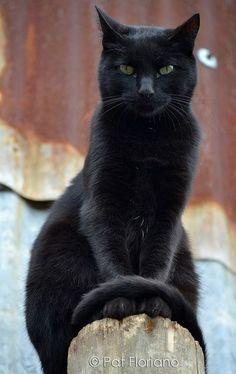 black cat #cutecats #cats #blackcats