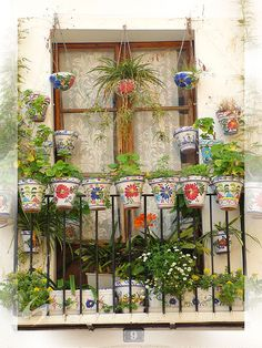 Lovely Hungarian window with lace curtains and cheerful flower pots with plants .praktiker.blog.hu