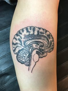 Anatomical Brain Tattoo - Done at Short North Tattoo in Columbus, OH