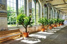 the Orangery in Knole, Kent, childhood home of Vita Sackville-West, photo by…