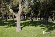 Trunks, Plants, Francisco Pizarro, Trekking, Walks, Fishing, Pictures, Drift Wood, Tree Trunks