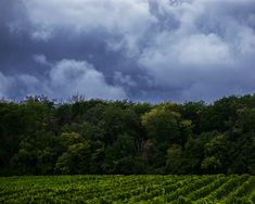 Amazing scene I had right in front of me one cloudy afternoon. How beautiful can also a cloudy day be. #sky #clouds #storm #vineyard #vienna #austria #cloudyday #nature #photography Vienna Austria, Cloudy Day, How Beautiful, Mother Nature, Vineyard, Nature Photography, To Go, Scene, Clouds