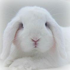 /(>'.'<)\Chubby Bunny