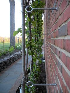 Belgian fence support - espalier support Very important instructions for adding to a brick house. Espalier Fruit Trees, Shade Structure, Garden Trellis, Wire Trellis, Climbing Roses, Garden Structures, Shade Garden, Garden Plants, Dream Garden