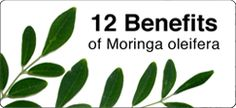 Amazing nutritional product that has helped me be Claritin free for over a year...after almost a lifetime of use. Moringa oleifera is said to be the most nutrient-rich plant ever discovered. Find out more by going to my website and make sure to watch the Discovery channel documentary on the plant!