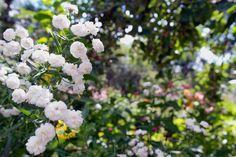 faire livrer des fleurs 39 #fleurs #bouquet
