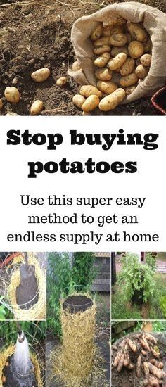 Organic gardening tip. Interested in producing your very own natural and organic vegetable garden? Here are some eco-friendly gardening tips which will help you in the correct direction.