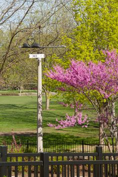 Swan Court at Lakeside Park. The perfect place to kick back on a sunny day. Photo by Jim Griggs.