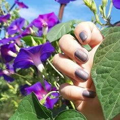 "karo-karolinKA on Instagram: ""Самый хамелеонинистый из хамелеонов для #МаникюрныйХамелеон это Cirque colors Velvetine - серый с розовым или медным, а может и с…"" Sapphire, Rings, Jewelry, Jewlery, Bijoux, Jewerly, Ring, Jewelery, Wire Wrapped Rings"