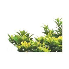 footer leaf - Polyvore
