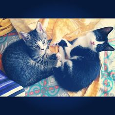 Mogwai & Midori after the vet - @nesuss- #webstagram