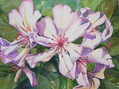 Image result for rhododendron botanical drawings