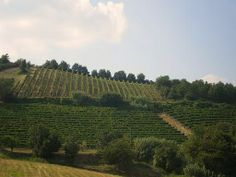 Eén van de heuvels rond Denice, Piemonte   www.huizenjacht-italie.com