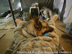 For those who serve...your sacrifices will never be forgotten. The bond between handlers and their 4-legged partners is 1 of trust, love, friendship & excellent instincts. God, I admire what these men/woman & their mwd's do and give of themselves on a daily basis. Stay cautious and Safe my friends!!