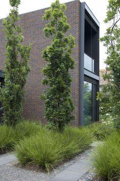 Columnar trees and ornamental grasses