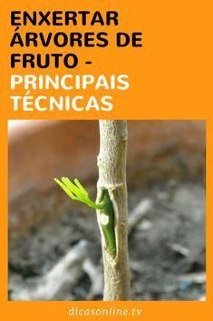 Como e quando enxertar árvores de fruto
