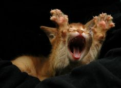 Yawn, 10 more minutes plzzzzz  .... some mornings I  feel like that too! of for that 10 minutes morezzzzz