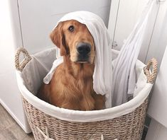 let me help with the laundry