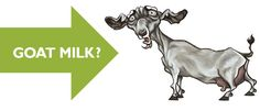 Curious about trying raw goat milk? Share your raw goat milk feeding stories/pictures with us! #PrimalPet