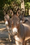Animals find peace at sanctuary | Black Beauty Ranch