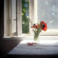 #still #life #photography • photo: Летний сон о букете с маками | photographer: ocicat | WWW.PHOTODOM.COM