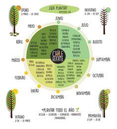 ¿Qué plantar y cuándo Vegetable Garden, Garden Plants, Herb Garden, House Plants, Organic Gardening, Gardening Tips, Natural Farming, Medicinal Herbs, Green Life