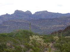 organ pipe NM