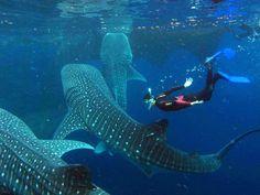 La Isla de Holbox en Quintana Roo,México es uno de los atractivos más cotizados por los turistas nacionales e internacionales.