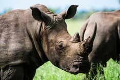 Wildlife poachers in Kenya may soon face capital punishment. The death penalty could soon be given to those who break the law in an effort to preserve endangered species. Macro Photography, Wildlife Photography, Photography Jobs, Photography Business, Photography Settings, Freelance Photography, Photography Articles, Photography Basics, Photography Courses